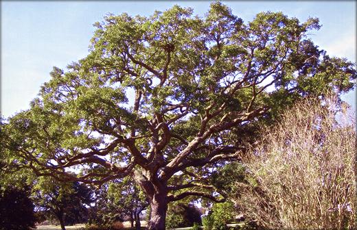 photo_pruning1